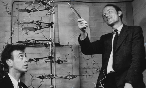 Il·lustració 1. Watson i Crick mostren el seu model tridimensional de la molècula d'ADN.