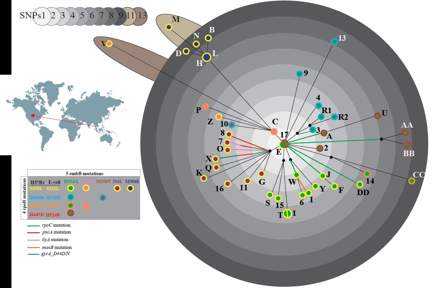 Genomic epidemiology