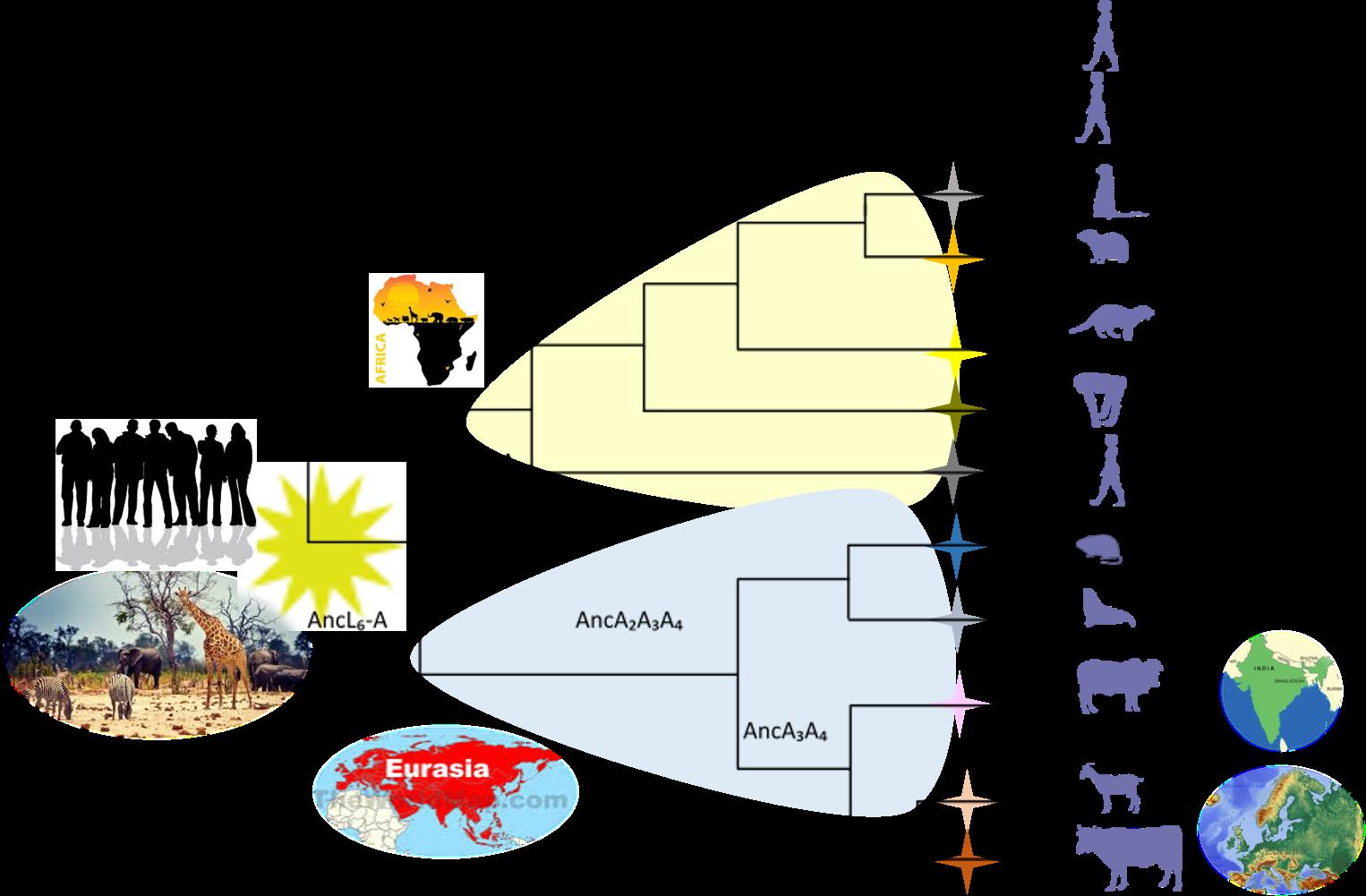 M. tuberculosis evolutionary history