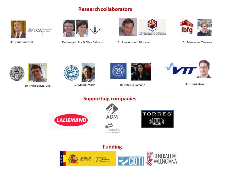 Research Collaborators - iYeastBiotech