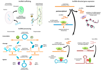 Viroids-host interactions