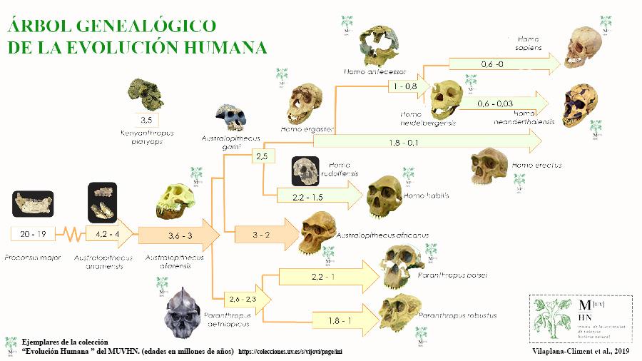 Homo Antecessor Julio