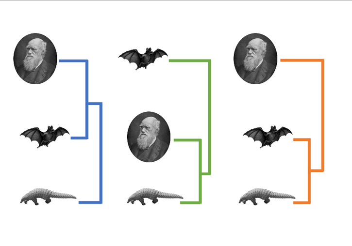 Comparison of the entire genome of the SARS-CoV-2 with bat and pangolin coronaviruses suggests that the virus that has caused the COVID-19 pandemic shares a closer common ancestor with the bat virus (left).