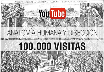 Anatomia Youtube